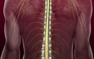 Травма спинного мозга – причина возникновения, симптоматика