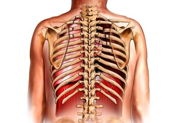 Ребра человека