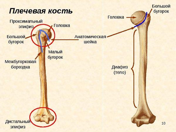 чрезмыщелковый перелом плечевой кости у детей